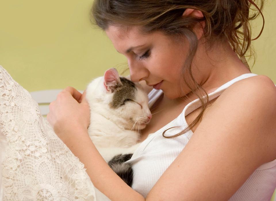 Причины почему кошка или кот очень любит своего хозяина или хозяйку, почему коты чувствуют любовь хозяев