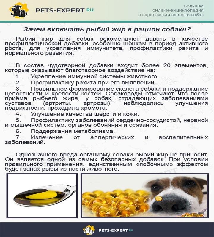 Какие фрукты и ягоды можно собакам   dogkind.ru