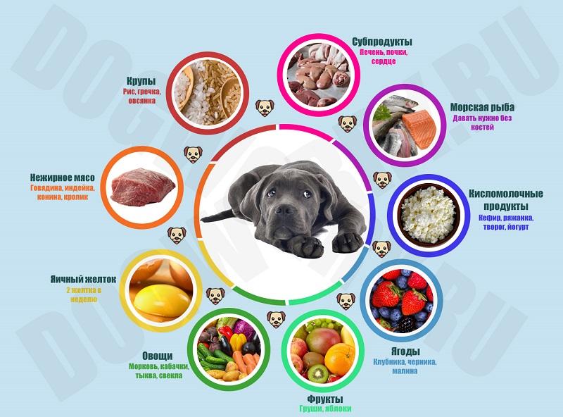 А вы знаете, чем кормить мопса и как правильно составить режим?
