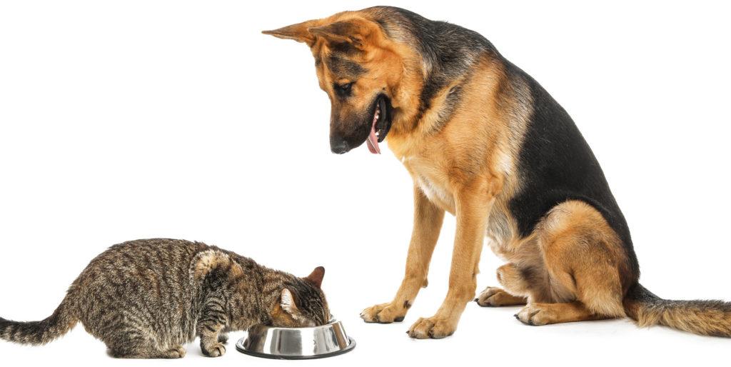 Рвота у собаки: что делать если у собаки рвота - здоровье животных | сеть ветеринарных клиник, зоомагазинов, ветаптек в воронеже
