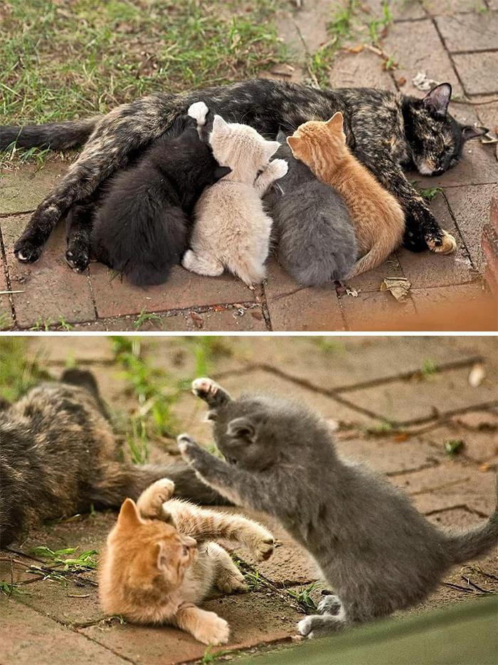 Как приучить котенка к лотку с наполнителем | котят, быстро