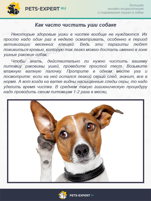 Как чистить уши собаке если она не дает