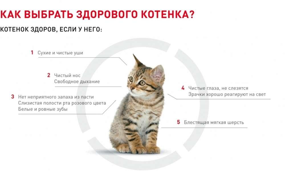 Заговоры на продажу котят и других животных