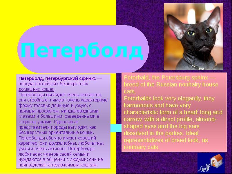 Донской сфинкс: описание породы ифото, уход исодержание, цена котят + отзывы