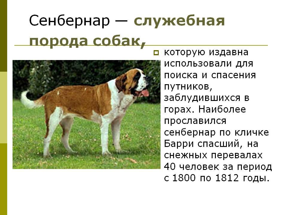 Сторожевые породы собак: список представителей с фото