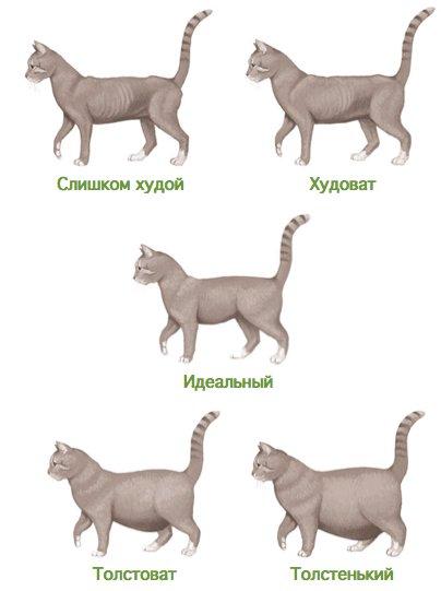 Как определить возраст котенка в домашних условиях: таблица стандартов