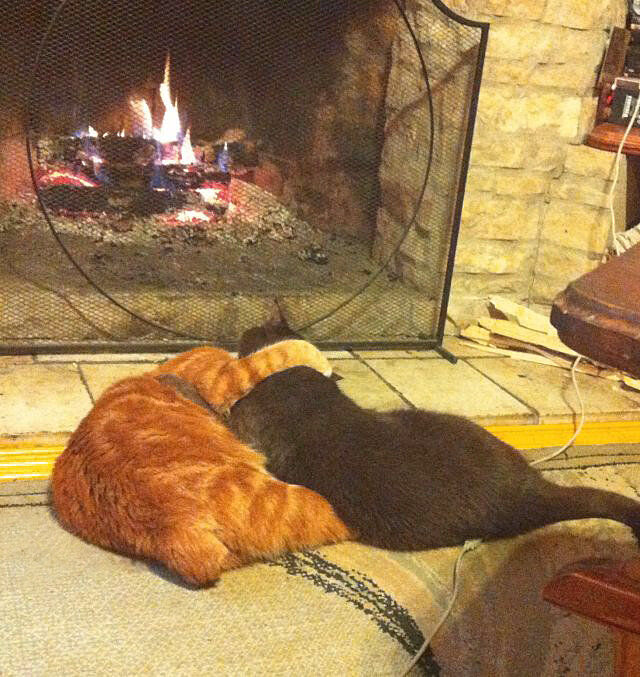 Как познакомить кошку с другими животными в доме   хиллс