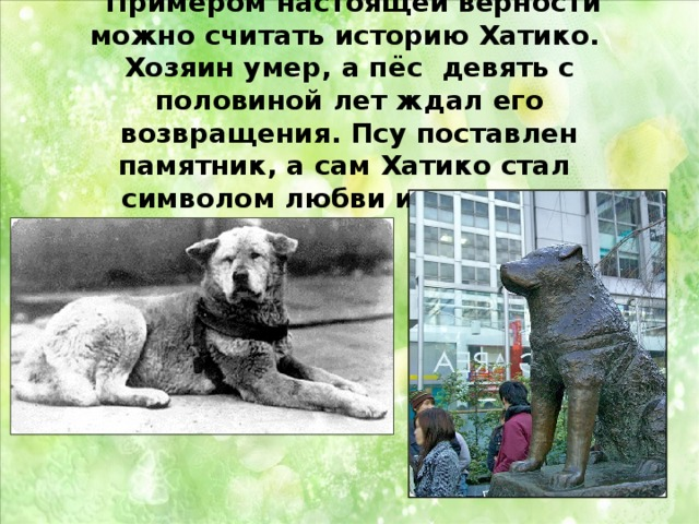 Самая толстая собака порода