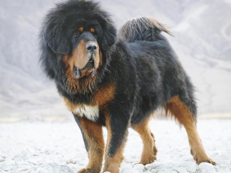 Как выбрать кличку для собак крупных пород?