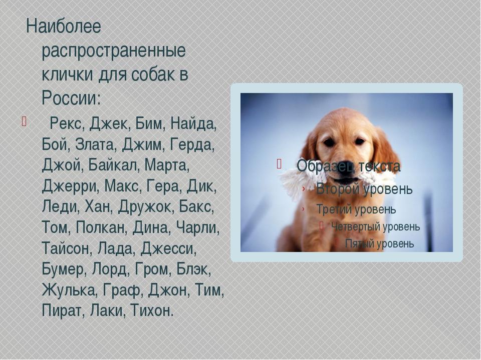 Клички для собак девочек — список имен