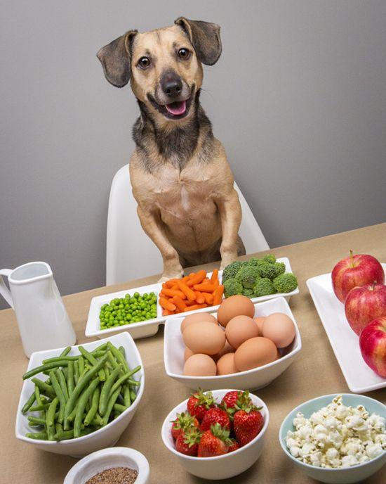 Домашнее питание маленькой собаки - правильное кормление – источник долголетия вашего питомца!