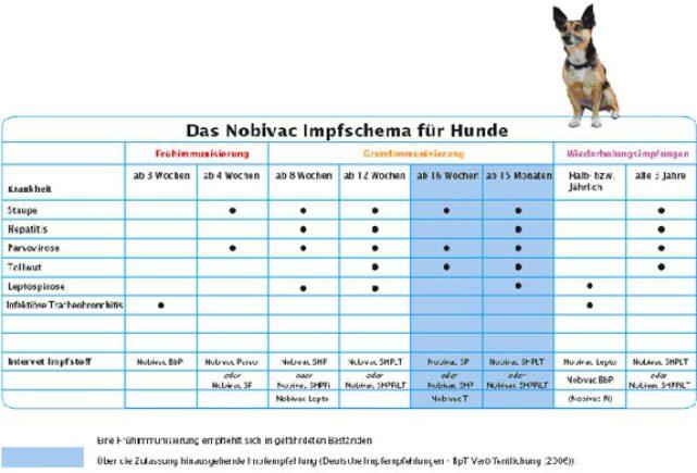 Все, что нужно знать о вакцинации собак