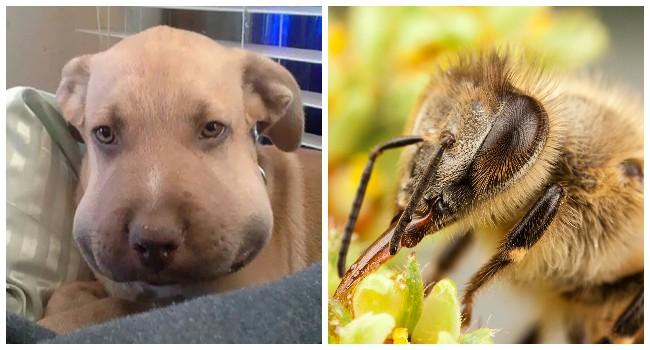 Как понять что собаку укусило насекомое – профилактика и первая помощь | hill's
