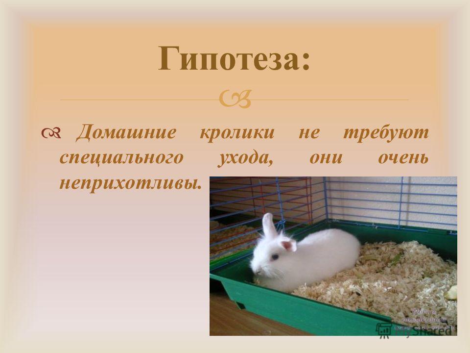 Карликовые кролики: технология разведения, уход. трудности при содержании и разведении карликовых кроликов