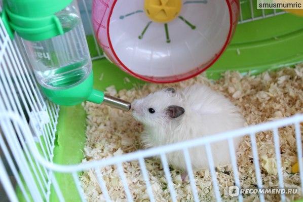Чем можно кормить хомяка в домашних условиях