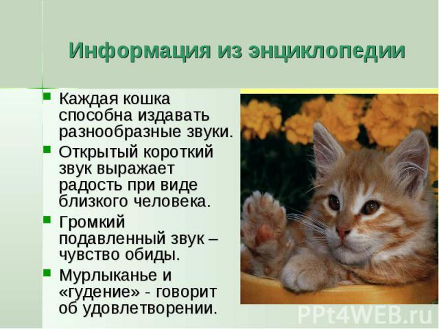 Ваша кошка издает странные звуки? проверьте, что они означают