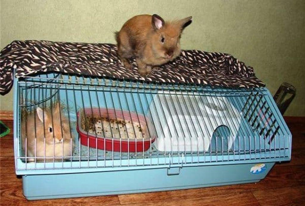 Уход за декоративными карликовыми кроликами и их содержание в домашних условиях, фото и отзывы