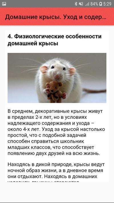 Декоративная крыса дамбо - описание, уход и содержание домашних условиях