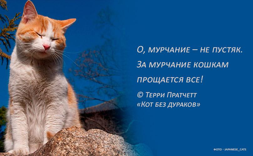 Почему кошки мурлыкают и как они это делают