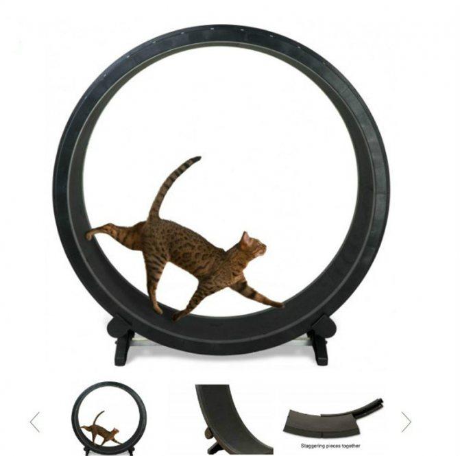 Беговое колесо для кошек: где купить, как сделать самому и польза