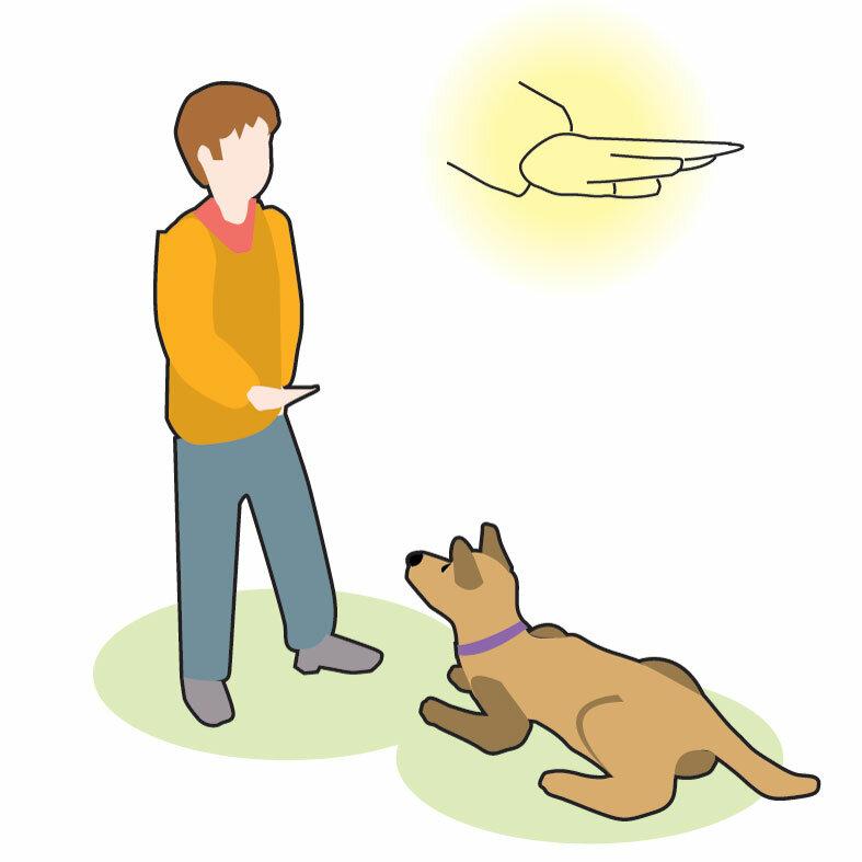 Как научить собаку командам: методы дрессировки питомца дома