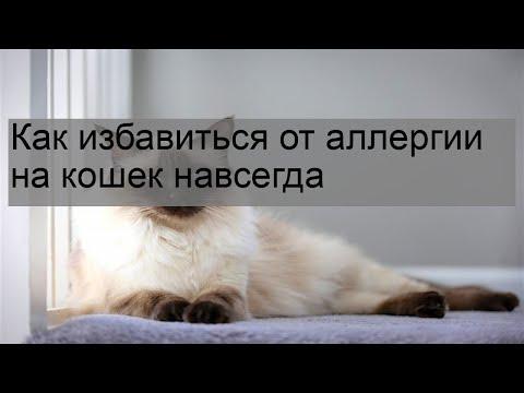 Лечение аллергии на кошек