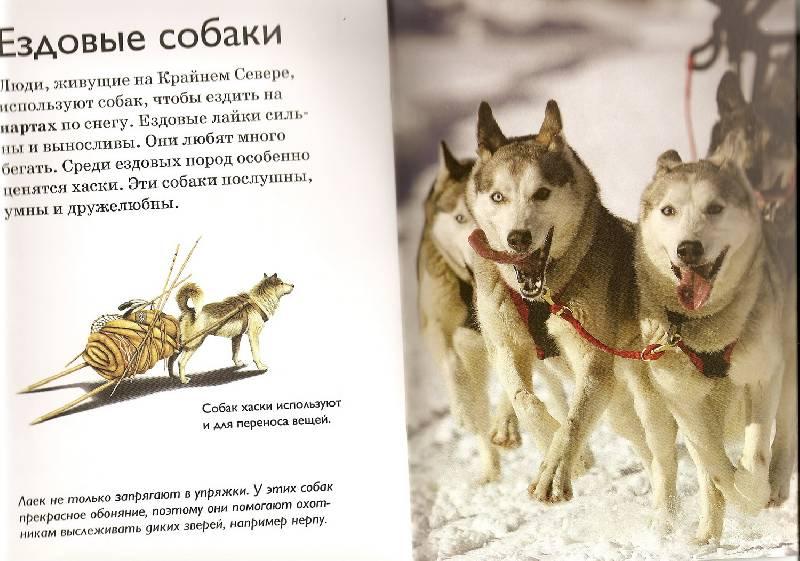 Ездовые собаки, северные породы собак