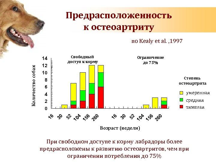 ᐉ сколько живут азиатские овчарки? - zoomanji.ru