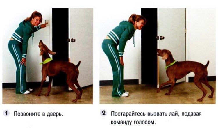 Как научить собаку первым командам: дрессировка собаки в домашних условиях
