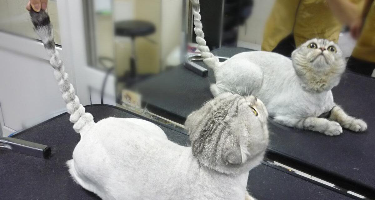 Стрижка кота: польза для здоровья питомца