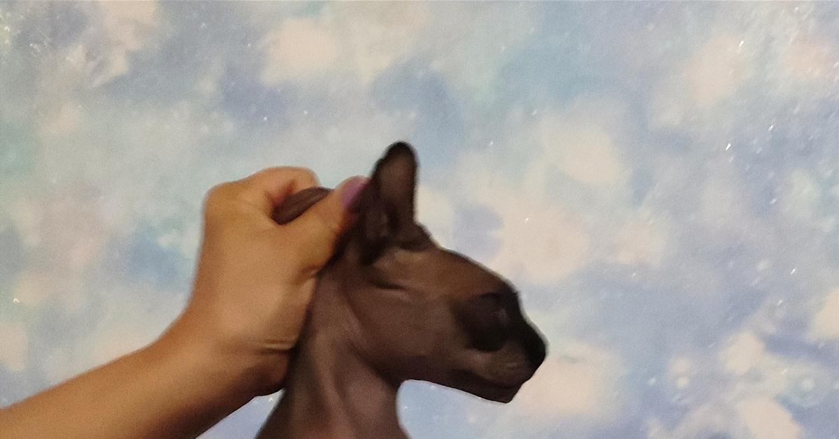 Лечение и профилактика мочекаменной болезни у кошек и собак | артемида - ветеринарная клиника во владимире с 25-летней историей