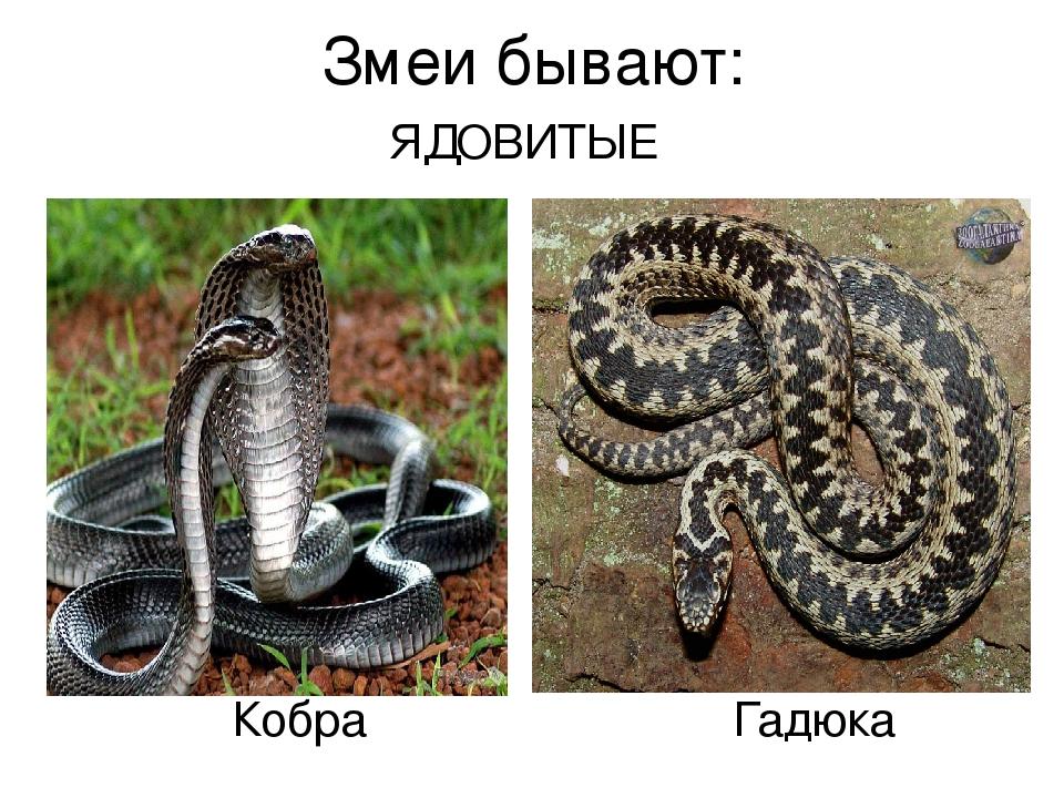 Самые ядовитые змеироссиитоп 7. оказание первой помощи при укусах ядовитых змей. * vsetemi.ru