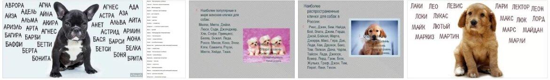 Клички для собак девочек: полный список имен для собак от а до я
