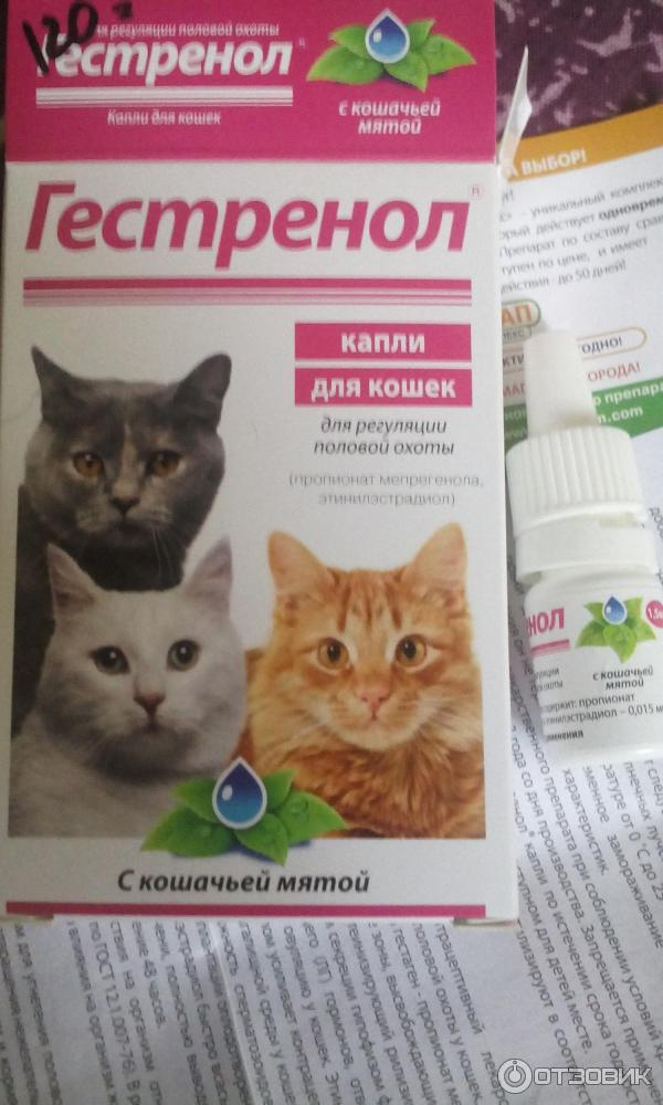 Успокоительное для кошек: когда можно и когда нельзя использовать