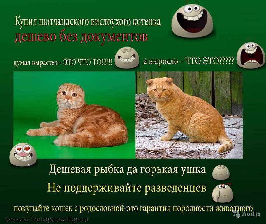 Разведение породистых кошек как прибыльный бизнес при минимальных вложениях