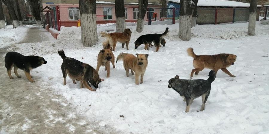 Как избавиться от бродячих собак во дворе и на улице