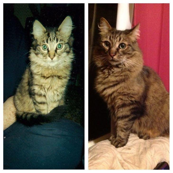 ᐉ когда у котят меняется шерсть на взрослую, линька у кошек - zoomanji.ru