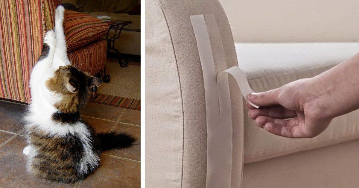 Как отучить кошку драть обои и мебель, советы и основные ошибки хозяев