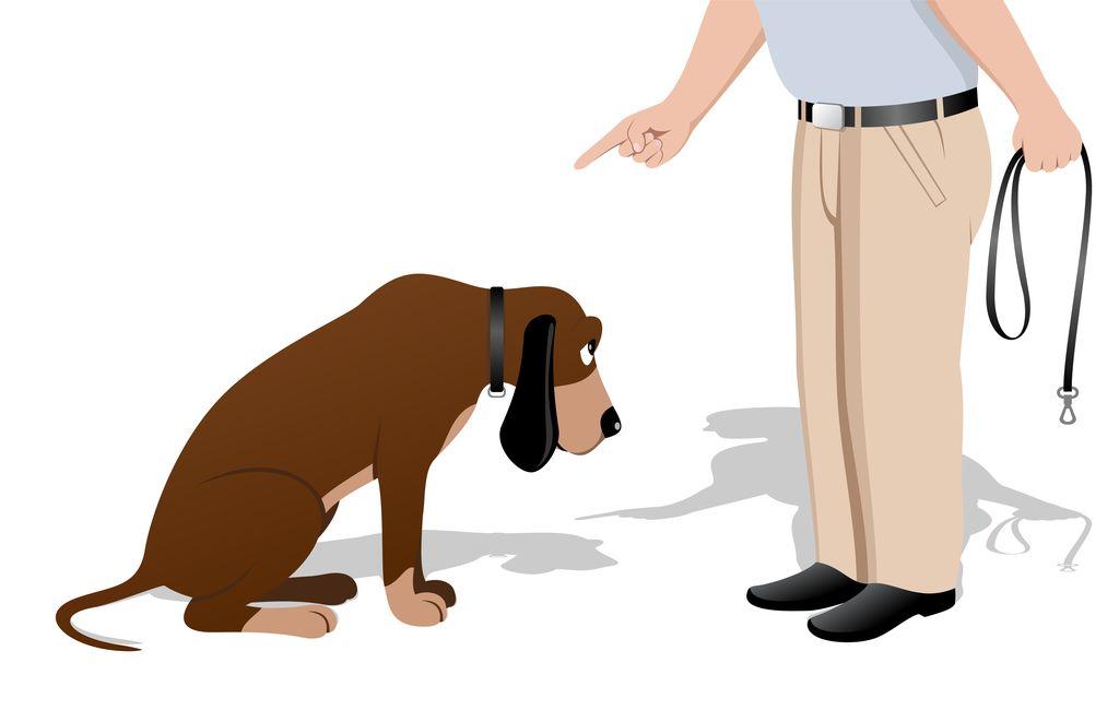 Как наказывать щенка. как правильно ругать собаку