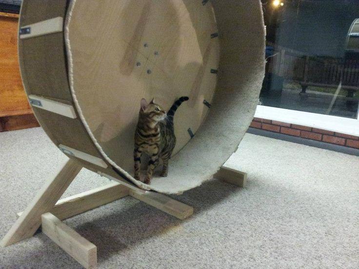 Беговое колесо для кошек и котов: изготовление своими руками поэтапно