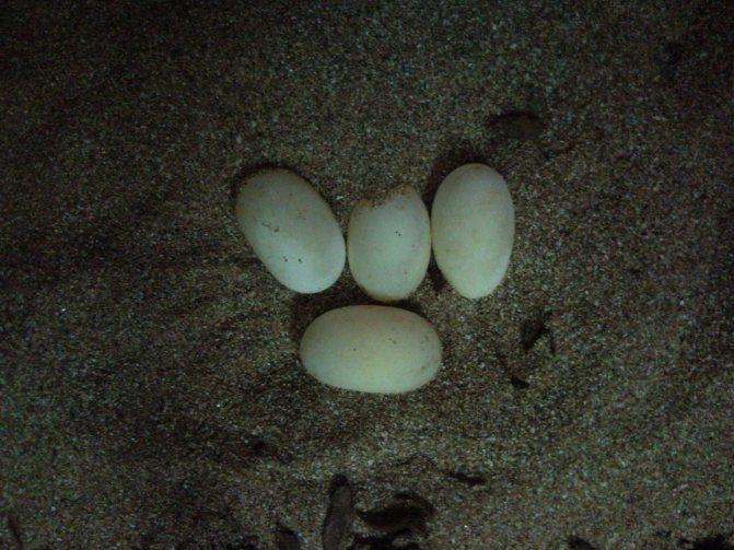 Снятие порчи яйцом: правила проведения ирасшифровка результатов