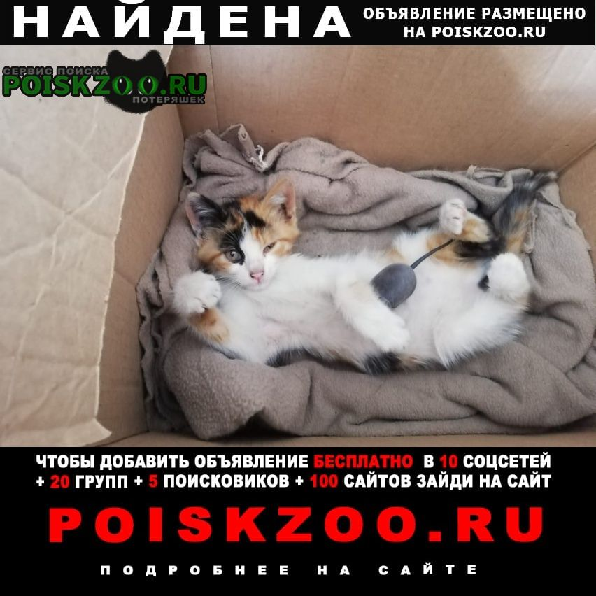 Трёхцветная кошка в доме приметы: что вещает, к чему перебежала дорогу, свадебные приметы, что означает, если прибилась кошка или котенок.