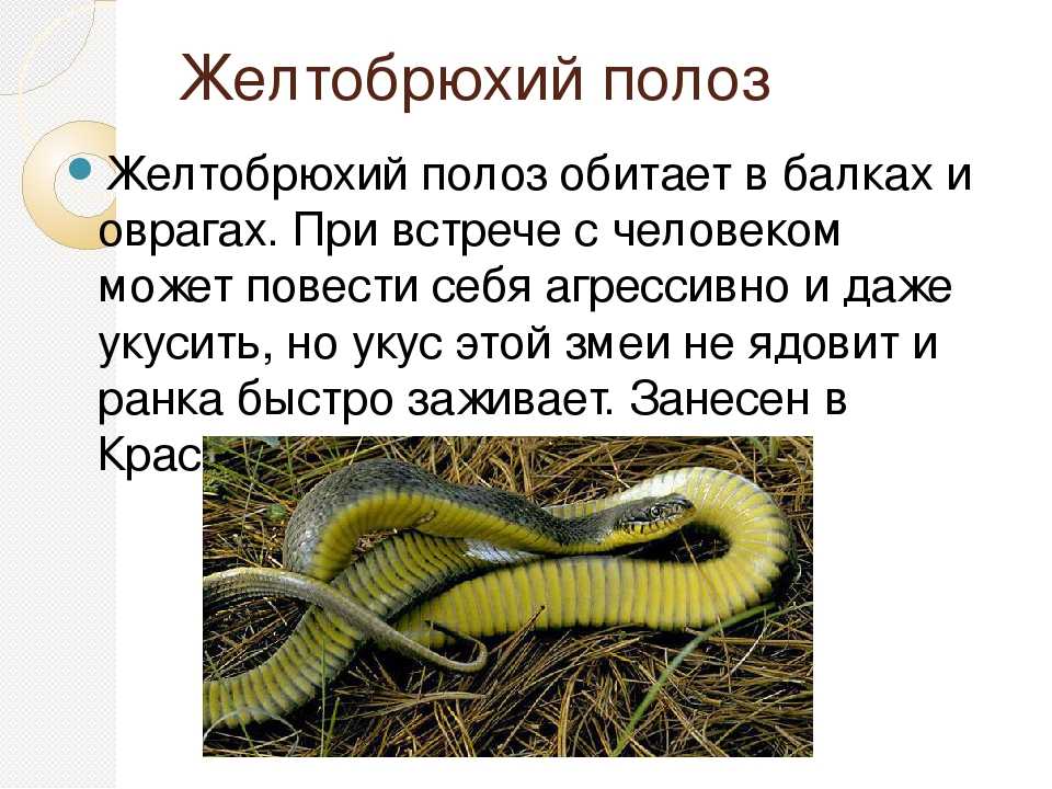 Как отпугнуть змей с дачного участка: химические яды, народные средства, приборы-отпугиватели и самодельные ловушки