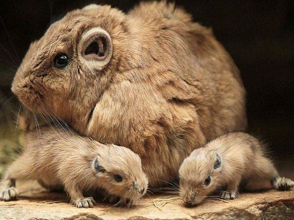 10 самых интересных животных пустыни сахара. обсуждение на liveinternet