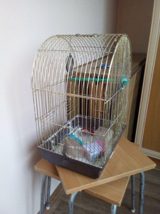 Обустройство клетки волнистого попугая