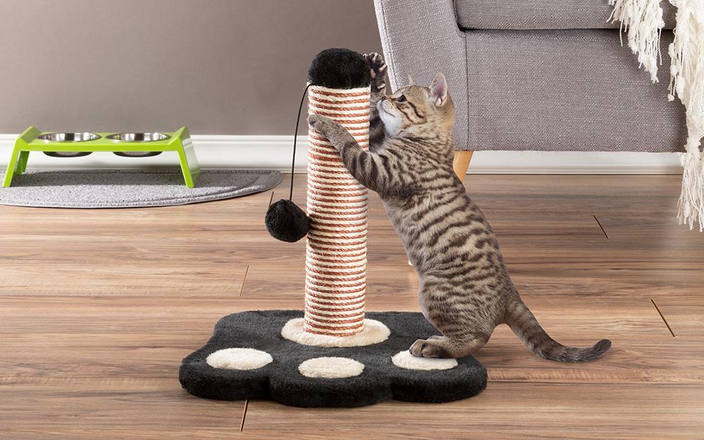 Как отучить кота драть обои: самые эффективные способы и методы решения проблемы