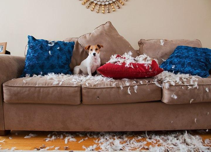 Секреты для хозяев домашних питомцев: как сохранить свежий ремонт?