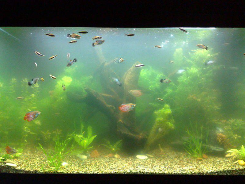Почему мутнеет вода в аквариуме? причина, способы устранения и средства