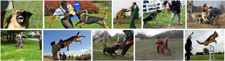 Как научить собаку командам лежать, сидеть, фас, умри, дай лапу и рядом - pet-mir.ru