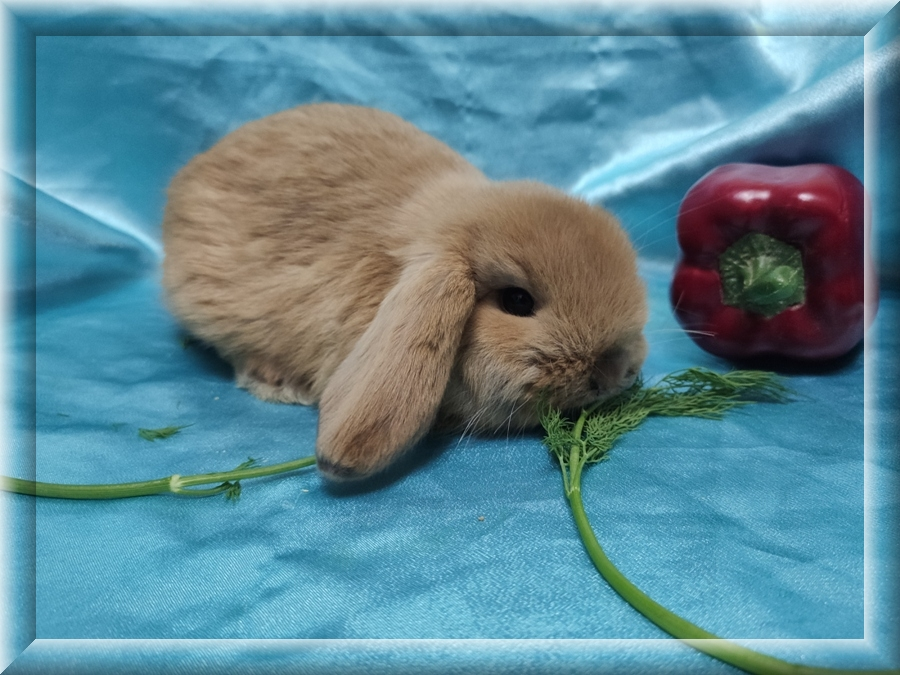 Какой кличкой назвать кролика?